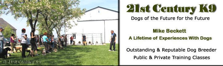 Dog Training Windsor Ontario Essex County Maricopa County and the greater Pheonix Area